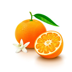 Tangerine fruit with half and flower on white background