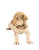 cute puppy mutts lying on white background poster