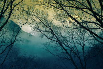 Morning fog in a mountain valley
