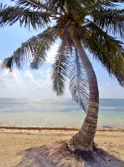 A palm tree on a secluded beach