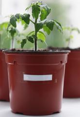 Photo plants.