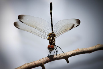 Dragon Fly standing on tree branch