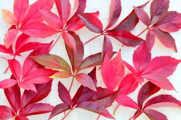 Rote Weinblätter auf weißer Bastunterlage