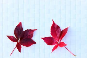 Zwei rote Weinblätter auf weißer Bastunterlage