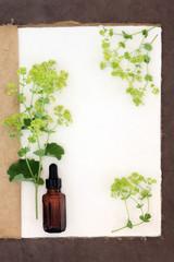 Ladys Mantle Herb