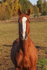 Horse.