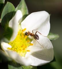 ant in nature. macro