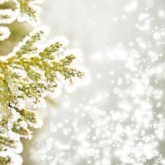 Close up on Christmas tree