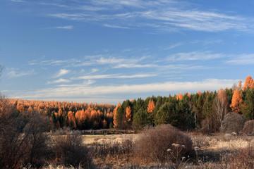 Autumn naiga in the Irkutsk region