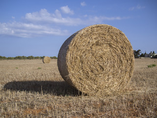 Straw bales in the countryside