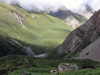 High Himalayan Landscape with Yaks
