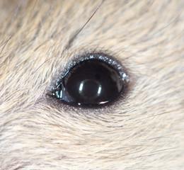 mouse eyes. close-up