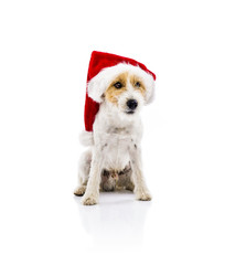 Dog sitting in santa hat isolated