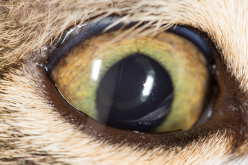cat eye. close-up
