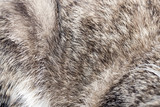 animal fur as background - 71961647