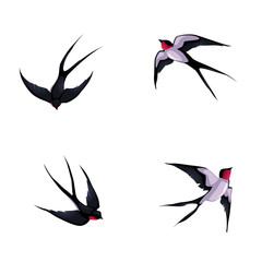 Four swallows.