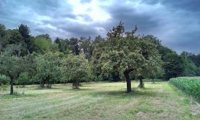 Sommerbäume