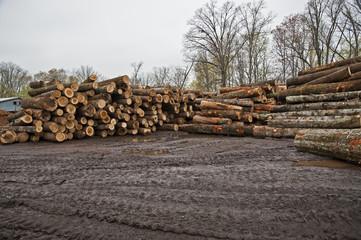 Stacks of Logs Awaiting Conversion To Lumber