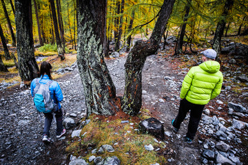 Randonneurs en forêt