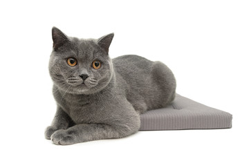 cat on a pillow isolated on white background