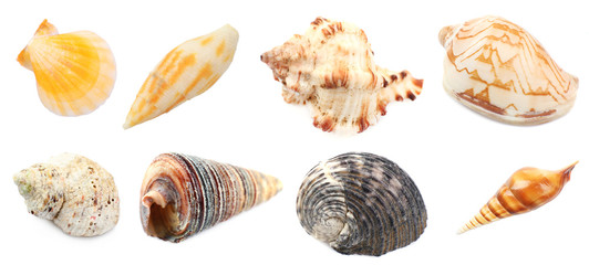 Collage of shells and other beach flotsam isolated on white