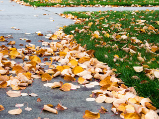Autumn leaves on walkway and yard