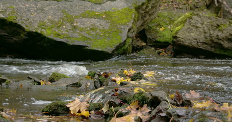 Rushing of water from the river and the maple leaves