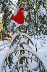Santa Claus Hat on snowy fir