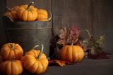 Miniature pumpkins on wooden