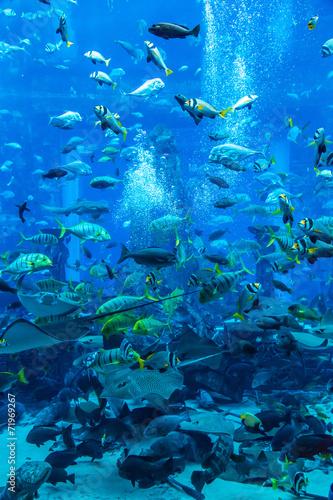 Stingray fish. Aquarium tropical fish on a coral reef - 71969267