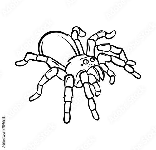 Tarantula tattoo - 71976688