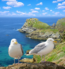 Seagulls on the coast of the Atlantic Ocean