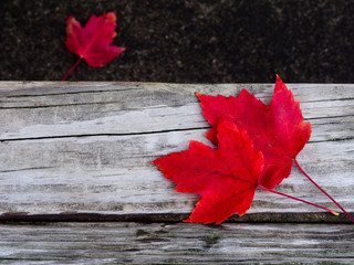 Bright red autumn leaves on the wooden bench