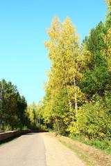 Дорога осенью