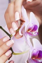 Paznokcie piękne kobiety z french manicure.