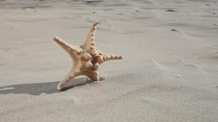 Starfish seastar star on the sandy beach. Summer vacation.