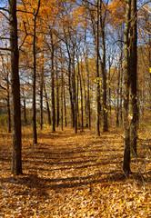 Autumn landscape. The path through the woods