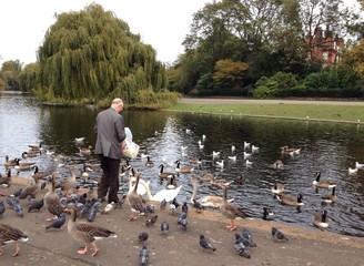 Rentner Vögel Füttern