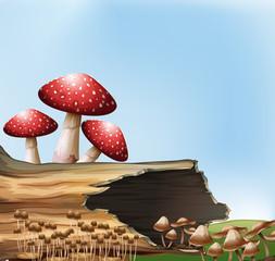 A mushroom above the stump