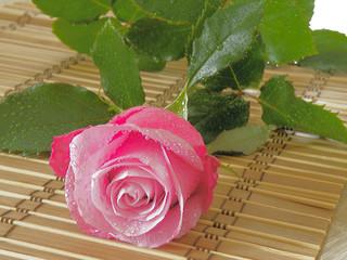 krople wody na róży