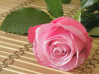 krople rosy na róży