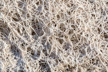 Frozen roots