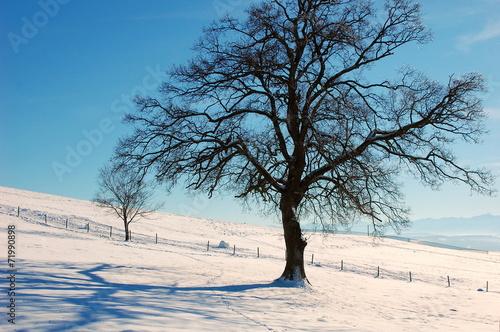 canvas print picture Alleinstehender Baum im Schnee
