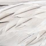 Bird feathers