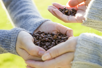 Hand holding a coffee beans