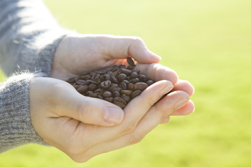 The hands of women who have a coffee beans