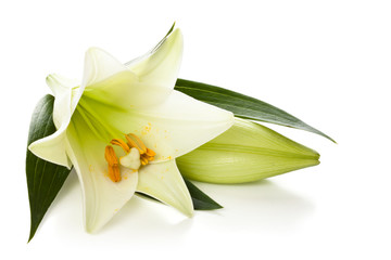 White lily.