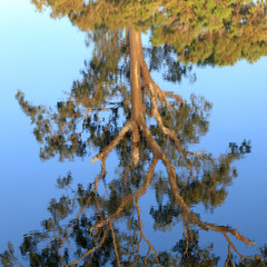 Billabong reflection