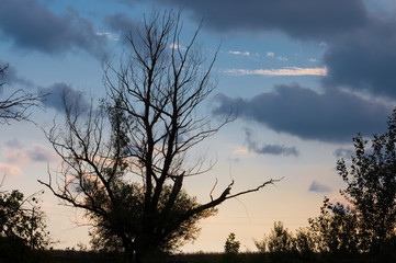 branches and the sky at sunset