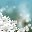 canvas print picture - Floraler Hintergrund - Wildblumen Sternmiere